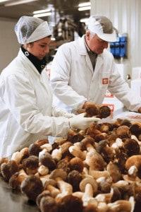 asiago-food-selezione-funghi-porcini-surgelati