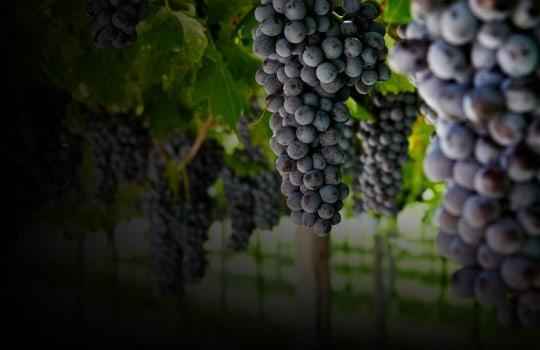 #eventimaster: Marcello Scandola, responsabile della comunicazione per l'azienda vitivinicola Allegrini, è ospite al nostro Master Food & Wine 3.0